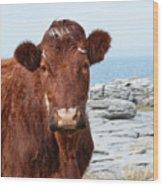 Beautiful Brown Cow On The Burren In Ireland Wood Print