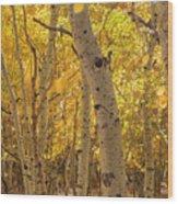 Beautiful Fall Color In California Wood Print