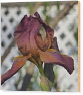 Beautiful Iris Wood Print