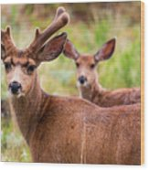 Beautiful Mule Deer Herd Wood Print