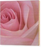 Beautiful Pink Rose Closeup Wood Print