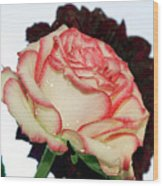 Beauty Rose Wood Print