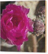 Beavertail Cactus Blossom 2 Wood Print