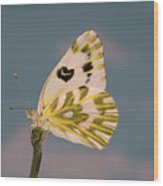 Becker's White Butterfly Wood Print