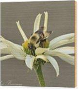 Bee On Coneflower 2 Wood Print