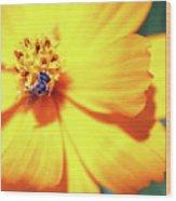 Bee Orange Wood Print