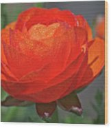 Begonia In The Morning Wood Print