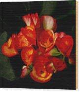 Begonias Wood Print