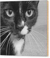 Bella The Cat Wood Print by Danielle Allard