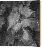 Bellevue Botanical Garden Leaves 6395 Wood Print