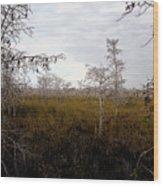 Big Cypress Wood Print