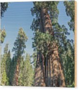 Big Tree Trail - Sequoia National Park - California Wood Print