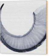 Bighorn Sheep Horn, X-ray Wood Print