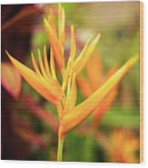 Bird Of Paradise Plant In The Garden. Wood Print