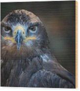 Bird Of Prey Wood Print