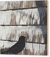 Bird Silhouette Wood Print