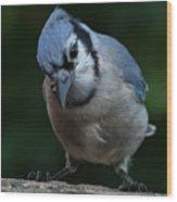 Birds From Heaven - Bluejay Wood Print