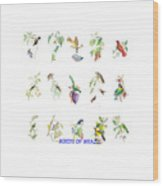 Birds Of Brazil Wood Print