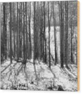Bison Lake Wood Print