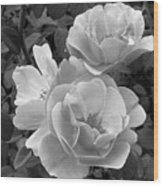 Black And White Roses 2 Wood Print