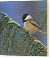Black-capped Chickadee Wood Print by Tony Beck