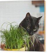 Black Cat Eating Cat Grass Wood Print