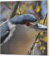 Black-crowned Night Heron  Wood Print