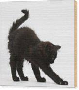 Black Kitten Stretching Wood Print