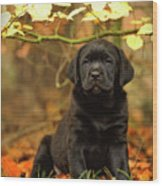 Black Labrador Retriever Puppy Wood Print