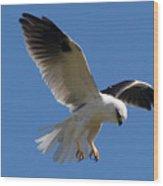 Black-shouldered Kite  Wood Print