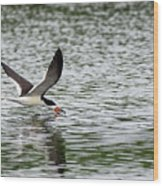 Black Skimmer Fishing Wood Print