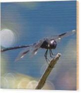 Black Spotted Dragonfly Wood Print