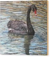 Black Swan On Water Wood Print
