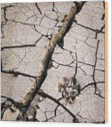 Blair Cracked Mud 1685 Wood Print