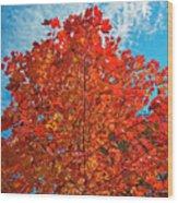 Blaze Of Glory Wood Print
