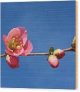 Bloomers Wood Print