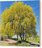 Blooming Palo Verde Wood Print