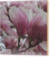 Blooming Pink Magnolias Wood Print