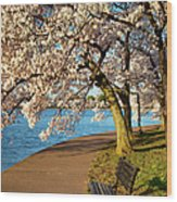 Blossoming Cherry Trees Wood Print