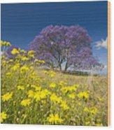 Blossoming Jacaranda Wood Print