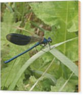 Blue Dragonfly On Leaf Wood Print
