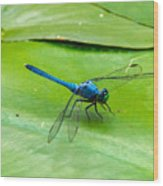 Blue Dragonfly On Lily Pad Wood Print