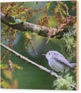 Blue-gray Gnatcatcher In Conifer Wood Print