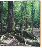Blue Hole National Park Wood Print