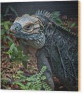Blue Iguana Wood Print