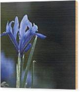 Blue Iris Hermodactyloides Wood Print