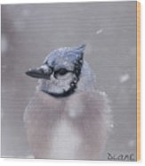 Blue Jay In A Blizzard Wood Print