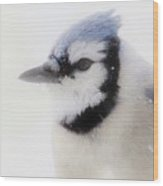 Blue Jay In Winter Wood Print