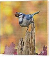 Blue Jay With Acorn Wood Print