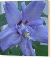 Blue Rose Of Sharon Wood Print
